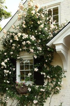 The Best Climbing Rose - Modern Country Style blog
