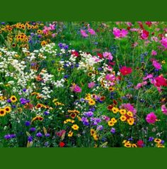 Wild flower garden - for the knoll by the road. Clear it our and spread wild flower mix. Wild Flowers, Beautiful Flowers, Meadow Flowers, Exotic Flowers, Fresh Flowers, Purple Flowers, Wildflower Seeds, Parcs, Dream Garden
