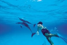 Experience Swimming With Dolphins Up Close and Personal