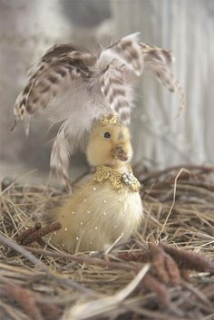 Jeanne d'Arc Living Taxidermy Decor, Faux Taxidermy, Handmade Stuffed Animals, Home Grown Vegetables, Easter Egg Crafts, Vintage Easter, Bird Watching, Pet Birds, Cute Animals