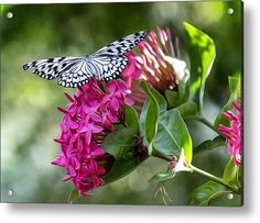 Paper Kite On Fluid Blossoms Acrylic Print By Bill Tiepelman