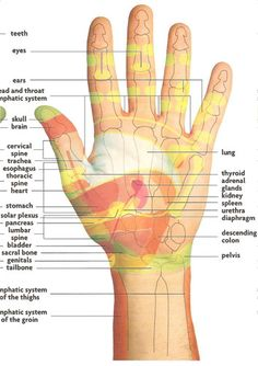 The therapy of reflexology is based on the idea that health giving energy flows… Alternative Therapies, Alternative Medicine, Reiki, Health And Nutrition, Health And Wellness, Yoga, Ayurveda, Hand Reflexology, Accupuncture