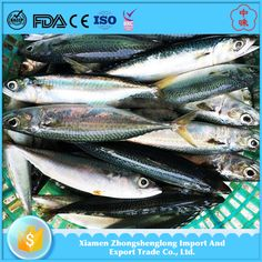 Frozen Fish Whole Round Pacific Mackerel with Competitive Price.