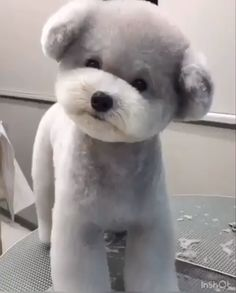 Best Dog Grooming Styles From Dog take action Experts. ** More details could be found at the image url. Teddy Bear Puppies, Fluffy Puppies, Cute Dogs And Puppies, Baby Dogs, Teacup Puppies, Small Puppies, Doggies, Dog Grooming Styles, Poodle Grooming