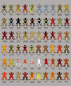 some of the many morphs and color patterns of the poison dart frogs oophaga histrionica, lehmanni, occultator, and sylvatica
