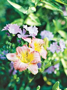 Daylily - we have this all over our yard.  It loves the clay soil, requires almost no effort at all, and is stunning all summer long.