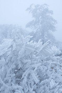 Blue | White...Winter