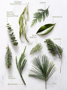 Greenery staples such as pine, magnolia, eucalyptus and juniper make for stunning holiday greenery arrangements.