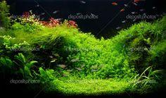 planted freshwater aquarium setup | Planted Freshwater Tank