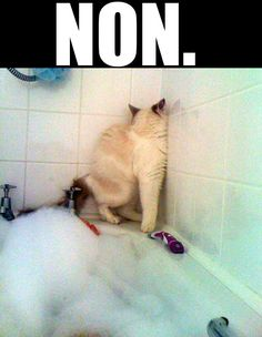Cats are so individual and stubborn:) Too funny. Looks like grumpy cat Clean Funny Pictures, Funny Animal Pictures, Funny Photos, Funny Animals, Cute Animals, Funniest Pictures, Funniest Quotes, Funniest Animals, Time Pictures