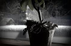 Blumen auf der Fensterbank im Winter