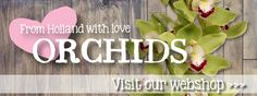 Now available: From Holland With Love Orchids Cymbidiums
