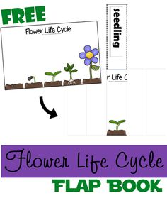 Kids love lift-the-flap-books. Here is a fun way to combine science &  flap books for an engaging free printable to help kids learn about flower life cycles!