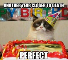 Grumpy Cat must be allergic to happiness...and parties..