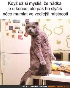 45 Animated Gifs of Funny and Cute Cats - images/slides added under category of Popular Memes and Images Cute Cat Memes, Funny Animal Memes, Funny Animal Pictures, Funny Relatable Memes, Funny Cats, Funny Animals, Funny Jokes, Hilarious, Top Funny