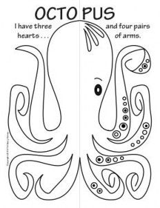octapus Symmetry Activity Coloring Pages
