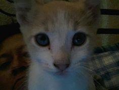 Ya aprendió a usar la compu... ¡¡ Selfie !! #selfie #cat #kitty