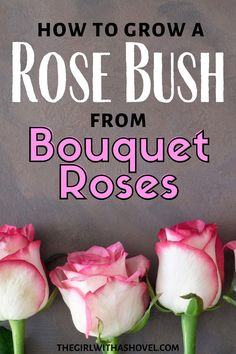 Well that special someone got you a dozen roses but beautiful cut flowers will not last forever. I will show you how you can transform the cutting into a rose plant that will be a constant reminder of that gift. From Bouquet to Bush! Keep your cut roses alive! How to Propagate Roses | Rose Propagation | How to Grow Roses from Cut Flowers | How to Use Bouqeut Flowers to Grow Roses | House Plants Decor, Plant Decor, Rose Propagation, Dozen Roses, Apartment Plants, Best Indoor Plants, Growing Roses, Planting Roses, Rose Bush