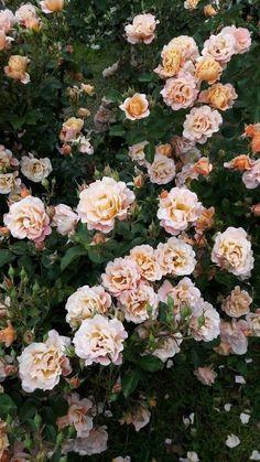 c0fb1e465 Las 20 fotografías de flores más hermosas e impactantes del mundo