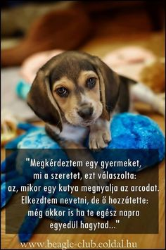 Fotó I Love Dogs, Yorkie, Animals And Pets, Einstein, Favorite Quotes, Spirituality, Inspirational Quotes, Puppies, Motivation