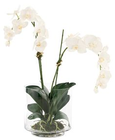 "Natural Decorations, Inc. - Orchid Phalaenopsis Cream White | Glass Cylinder, 31""x24"",$389"