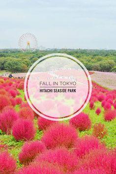 Fall in Tokyo Hitachi Seaside Park