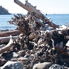 #bc #Britishcolumbia #ocean #sea #wood #driftwood #nature #roots #whytecliffpark D300 Nikon manual mode. Love macros experimental and capturing cool moments in Canada