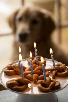 1000 Images About Recipes Dog Birthday Cakes On Pinterest