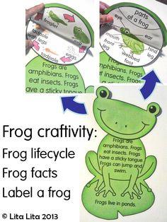 Frog science craft  English & Spanish $3.00