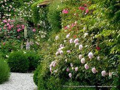 my secret garden www.cadellerose.org