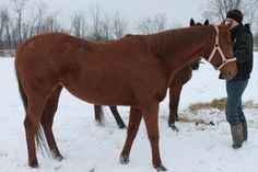 Skylar is an adoptable Thoroughbred Horse in Medina, OH. Skylar is a 7 yr old thoroughbred mare. She has a charming personality and gets along well with the other horses in the barn. Her training is u...