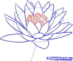 how to draw a water lily step 7