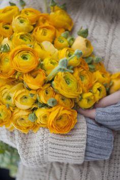 Lykken er en favn med vakre ranunkler. Ranunculus, My Sunshine, Yellow Flowers, Ladybug, Beautiful Flowers, Daisy, Centerpieces, Bouquet, Bloom