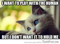 First World Problems Cat - 23