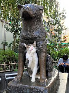 A cat nestles with Hachiko outside Tokyo's JR Shibuya Station in October. (Kenji Tsuji)