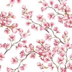 Seamless pattern with cherry blossoms. Watercolor illustration. royalty-free stock vector art