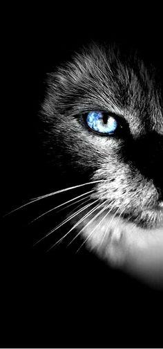 Katter har de vackraste ögon - förmodligen porten till en djup och mycket rik själ ››› Danje Förlag #DanjeNovell
