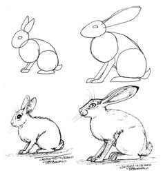 EMG-Zine - Rabbits and Hares how to draw - this may help!