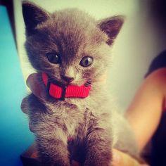 #Cats  #Cat  #Kittens  #Kitten  #Kitty  #Pets  #Pet  #Meow  #Moe  #CuteCats  #CuteCat #CuteKittens #CuteKitten #MeowMoe      adorable! ...   https://www.meowmoe.com/34864/