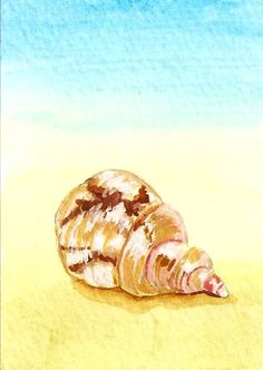Shell, Watercolor and ink by Jacqueline Zuckerman