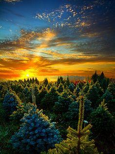 'Not Forgotten' photo by Phil Koch, via Flickr. - Wisconsin Christmas tree farm