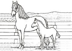 Die 1097 Besten Bilder Von Pferde In 2019 Horses Cowboys Und