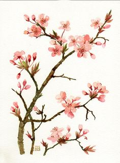 Pink blossom of prunus Original watercolor painting botanical art flower art floral painting