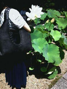 18.July  The lotus