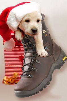 """Gassistiefel – der originelle Geschenktipp für Hundehalter. Mit einem Paar """"Dog Walker"""" liegt man bei Hundehaltern bestimmt richtig. Foto: djd/Dogwalker"""