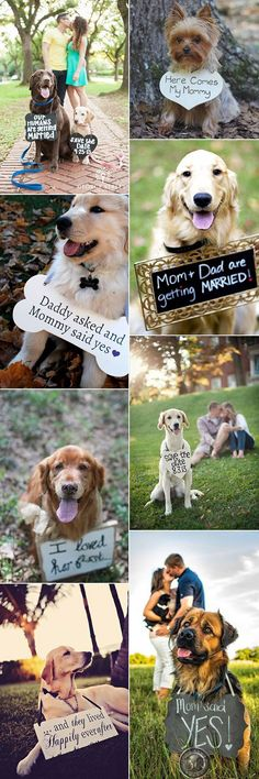 precious-wedding-photo-ideas-with-dogs.jpg (600×1800)