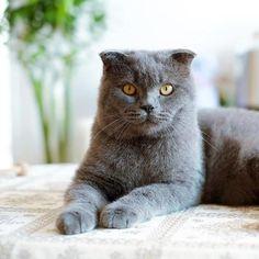 Como dar um comprimido a um gato. Todos sabemos do caráter genuíno e independente dos gatos, mas a verdade é que estes felinos domésticos precisam dos nossos cuidados, uma vez que são susceptíveis de sofrer várias...