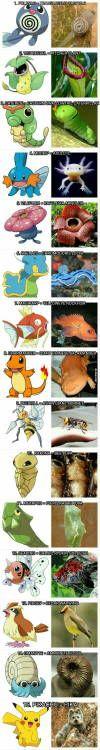 The real animals pokemon are based on  Pokemon Monsters Fantasy & Adventure Anime TV Series Meme