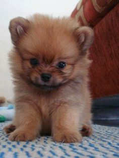 This is a cute puppy.