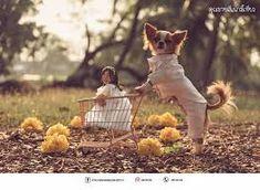 Khontuelek Photography - Google 搜尋 Dog Food Recipes, Lamb, Pets, Google, Animals, Animais, Animales, Animaux, Dog Recipes